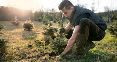 Engrais pour la plantation d'arbre Penn Ar Bed